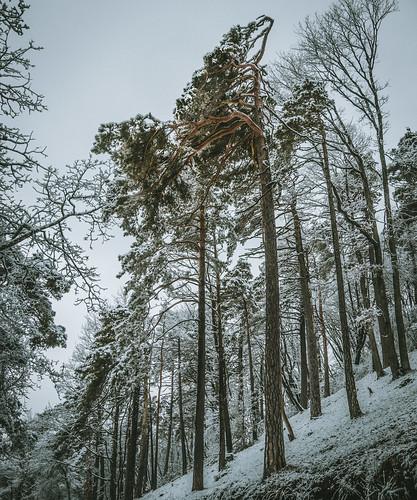 Wanderung Schinberg im Schnee - Effingen-Aargau-Schweiz-CH190203153718-©patrikwalde_com.jpg