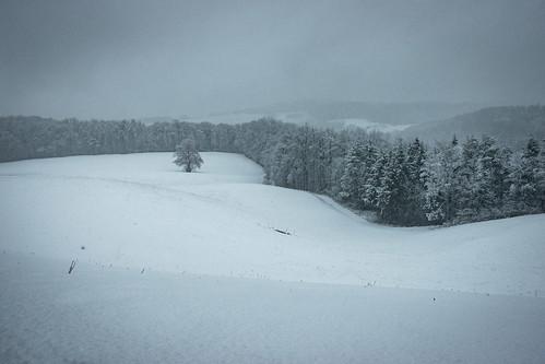 Wanderung Schinberg im Schnee - Mönthal-Aargau-Schweiz-CH190203142141-©patrikwalde_com.jpg