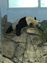 Xiang mei side