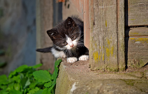 Explore... First steps. � (Autumn cats 2019)