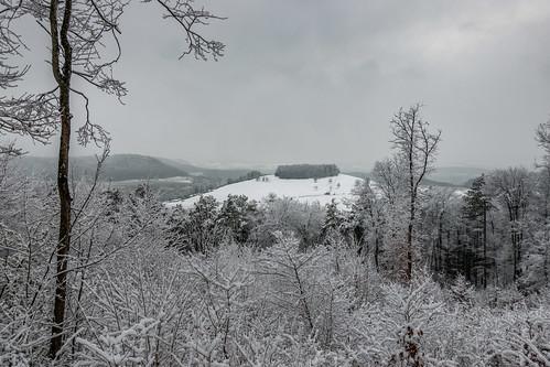 Wanderung Schinberg im Schnee - Effingen-Aargau-Schweiz-CH190203154047-©patrikwalde_com.jpg