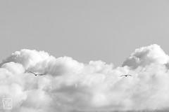 les oiseaux - Photo of Évenos