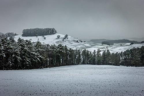 Wanderung Schinberg im Schnee - Elfingen-Aargau-Schweiz-CH190203155208-©patrikwalde_com.jpg