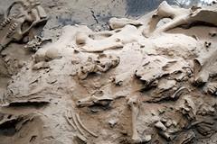 La Brea jumble of fossils, tar, dirt DSC_0934
