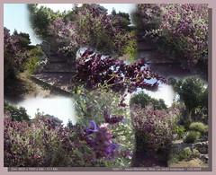 Le jardin botanique de la ville de Nice