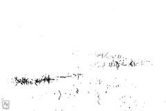 dessins d'herbes aquatiques - Photo of Évenos