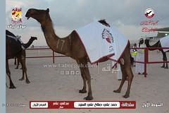 صور منافسات مهرجان قطر الثالث للمجاهيم والوضح (أشواط المجاهيم) صباح  11-11-2019