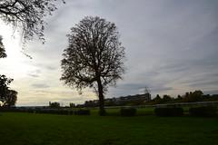 Un arbre sur l'hippodrome