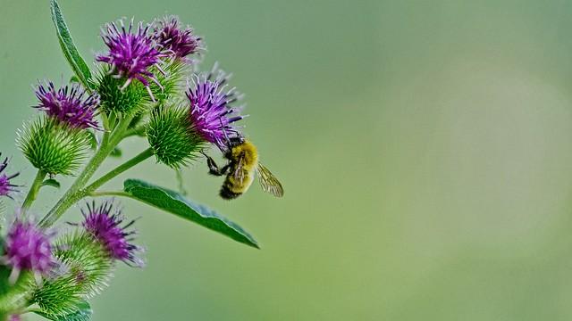 Je pollinise