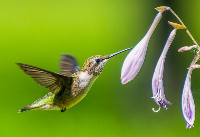 Nectar aléatoire