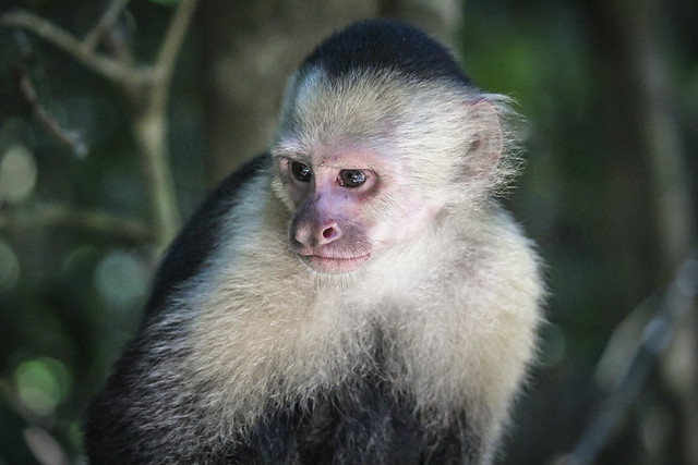Le singe d'Albert