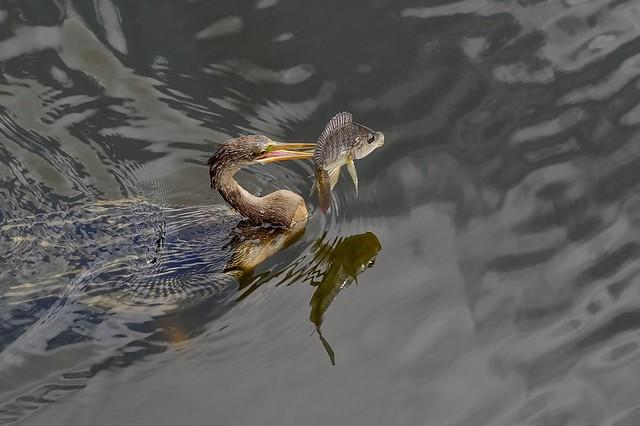 La pêche du jour
