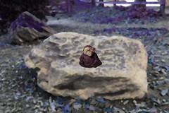 Monkey on a rock 2
