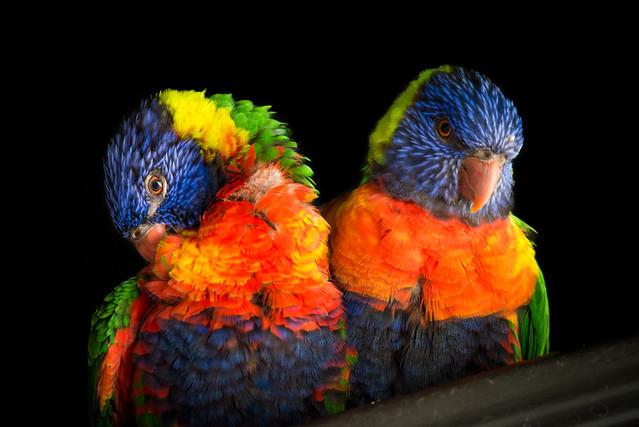 Couple flamboyant
