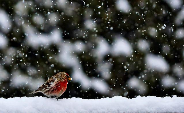Un baiser de l'hiver