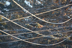 Ice on the power lines