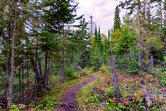 Hiking Trail from Three Mile to Daisy Farm - Isle Royale National Park