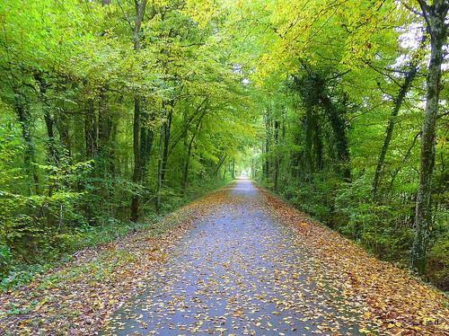 SONY 5 - Lahnradweg