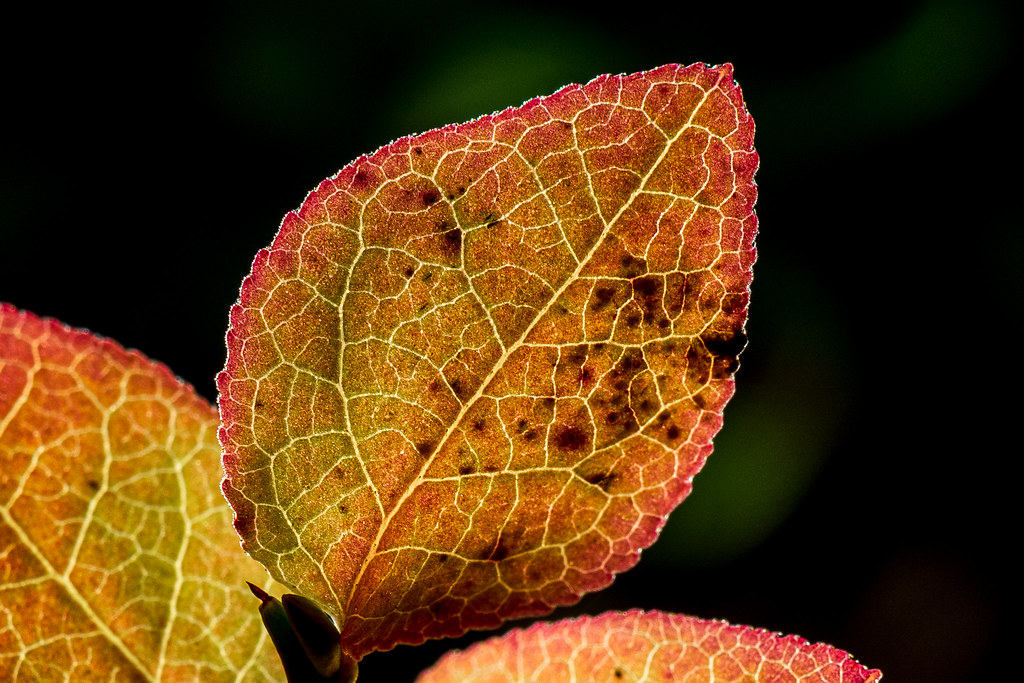 Autumn Colours near Axelbrottet
