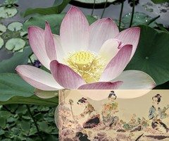 Picking Lotus Flowers 采莲 - 李白