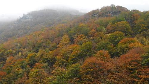 Herbstlich angehaucht