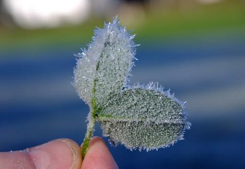 ice crystals...