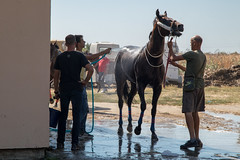 Men washing a horse