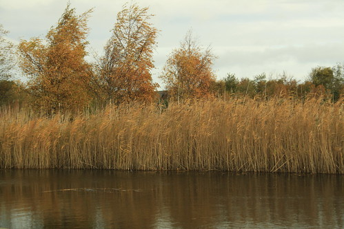 Pond Colours in autumn