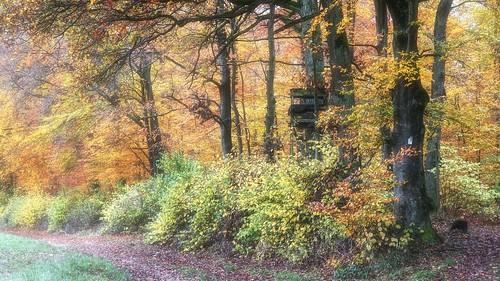 Lalo Autumn