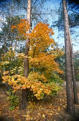 Осенний пожар / Autumn fire
