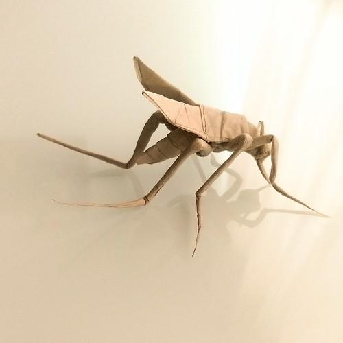 Mosquito v.4 by Shusako Uto, dò handmade paper extra thin 30x30cm