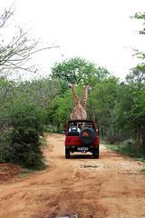 Kruger National Park / ZA