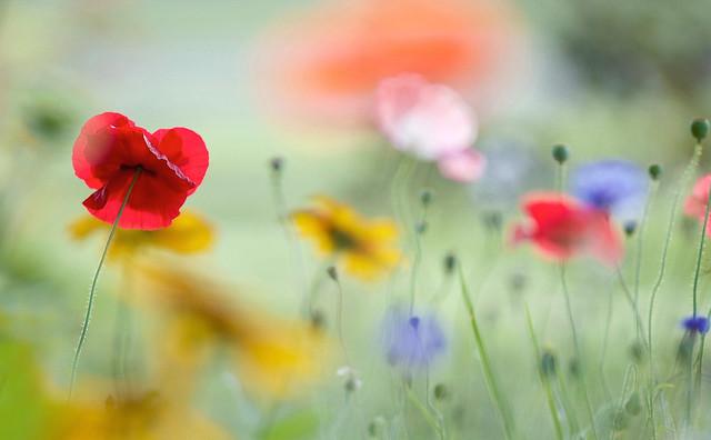 Le jardin qui danse