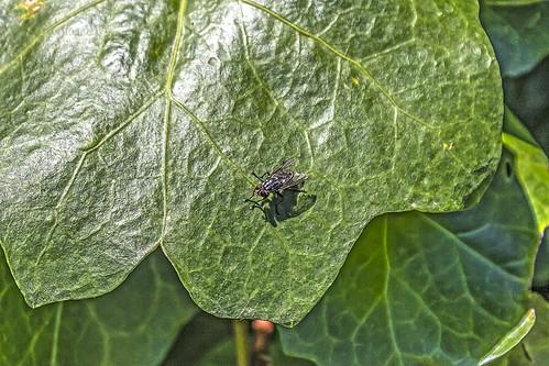 La mosca y la hoja