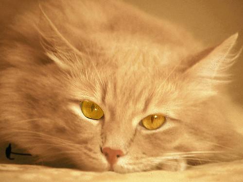 Beautiful Blonde Bobbie