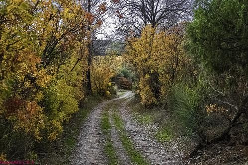 The Pathway to Autumn ....., El Camino hacia el Otoño.....