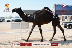 صور منافسات مهرجان قطر الثالث للمجاهيم والوضح (أشواط المجاهيم) صباح  13-11-2019