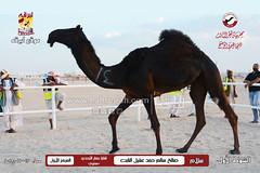 صور منافسات مهرجان قطر الثالث للمجاهيم والوضح (أشوط المجاهيم) مساء  13-11-2019