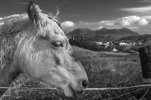 My lovely Horse, Clifden, Galway.