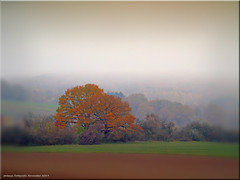 Herbstlandschaft - autumn landscape