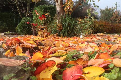 Autumn colours in Ballycashin