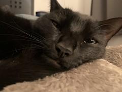 Sleepy Martha #cat