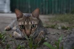 My Cat Star