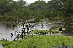 banhado do Rio Gravatai