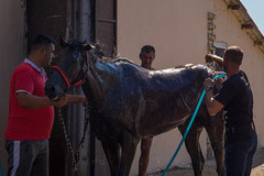Owner holding a horse by its reins while a stable boy is washing it