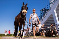 Pferd und Besitzer mit Zügel in Hand