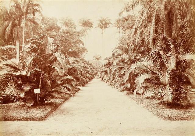 O Jardim Botânico do Riode Janeirofoi o primeiro do Brasil, aberto em 1808, com a chegada de d.João VI; registro é da década de 1890 - Créditos: Juan Gutierrez/Museu Histórico Nacional