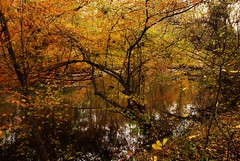 Patuxent River Autumn Scene