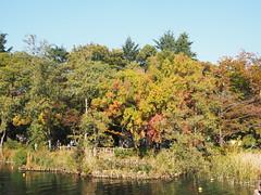 Inokashira park fall foliage