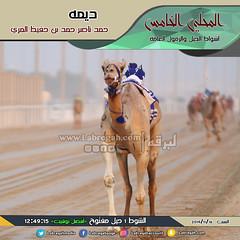 صور سباق الحيل والزمول (الأشواط العامة) المحلي الخامس صباح  16-11-2019